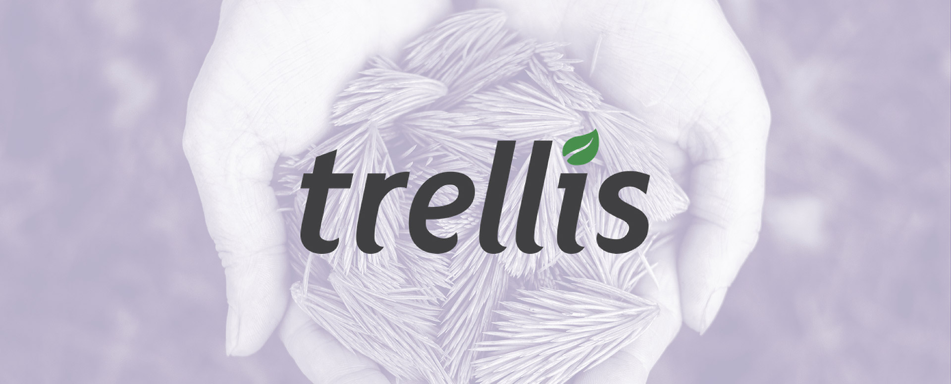 Social Enterprise Profile: Trellis